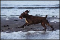 Tips For Photographing Dogs - Action Shots