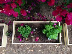 Repurpose: Dresser drawer planters