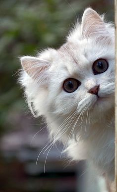 Cute Kitty Playing Hide and Seek :)