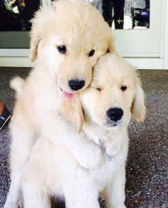 So so cute!!!!!!