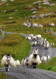 One Way Traffic on Isle of Lewis | by Ron Gilmore