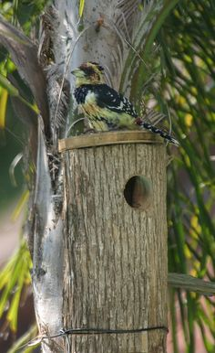 Old Wooden Bird House Birdhouse Designs, Birdhouse Ideas, Birdhouses, Wooden Bird Houses, Bird House Feeder, Natural Homes, Bird Boxes, Animal Projects, Little Houses