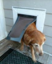 Home Energy Conservation - low air infiltration, energy efficient pet door. Solar Energy Information, Pet Door, Energy Conservation, Solar Water, Energy Projects, Water Heating, Energy Consumption, Energy Efficiency, Dog Cat