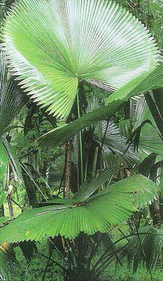 Sumawong's Palm