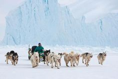 Qaanaaq. Dogsledge tour / Hundeslæde tur