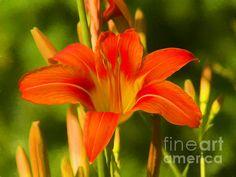 Fine Art America, Instagram Images, Lily, Posters, Flowers, Artist, Artwork, Plants, Work Of Art