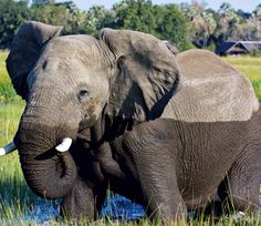 Clue 3: Find us a photo on Jetsetter where you can find an elephant in your backyard #JSElephant    Hint: http://passport.jetsetter.com/post/31339826640/safari-so-good-nyc-based-photographer-stephanie