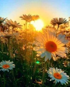 Tumblr Good Night, Good Morning, Spring Has Sprung, Sunset Photography, Natural Beauty, Summertime, Tumblr, Photoshoot, Sky