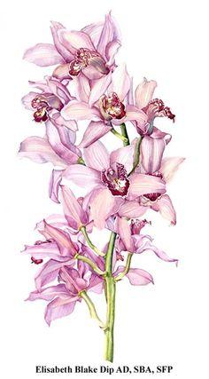 Orchid © Elisabeth Blake Dip AD SBA