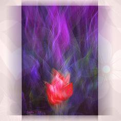 Rebel's Heart By Stelly 2012 by Paul Jaisini on Art Limited