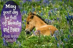 May your day be full of Beauty and Peace😊💖 Fb Quote, Horse Pictures, Peace, Horses, Day, Quotes, Photography, Animals, Beauty