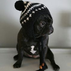 Cute & Funny French Bulldog Puppy