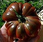 Aztec Heirloom Tomato Purple Calabash dates back to the Aztecs of pre-Columbian Mexico, who mixed it with hot chiles and and ground squash seeds to make a special salsa for fish and meat. Its flavor is rich and concentrated like a simmered sauce. Fantastic fresh, it really comes through in sauces and pastes.