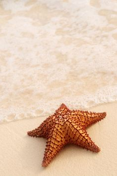 starfish guided imagery