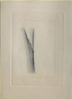Allen, George - Engraving of John Ruskin's Drawing of an Arum Stem, real size Drawing School, John Ruskin, Political Economy, Drawing Websites, Writing Styles, Geology, Teaching, Drawings, Nature