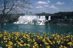 Image detail for -Niagara Falls and daffodils
