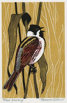 Reed Bunting by Robert Gillmor