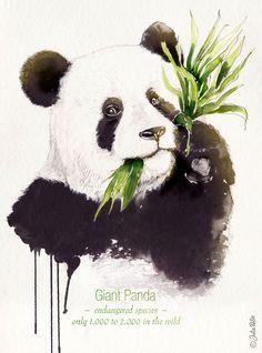 Endangered_GiantPanda by Julia Rößle