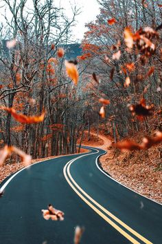 Autumn road...