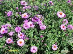 Oktober | Tuin kalender, het hele jaar door een tuin met bloemen.