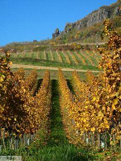 Balaton #Balaton wine region#autumn#fall#(Badacsony,Hungary)