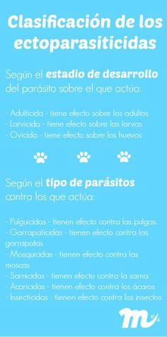 Cómo elegir el producto antiparasitario más adecuado #antiparasitario #perros #dogs #maskokotas #mascotas