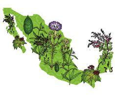 Plantas Medicinales de América