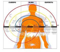 ALUM - Centro de Terapias Alternativas.: LA BIOGRAFÍA HUMANA
