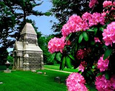 Beautiful flowers in a cemetery