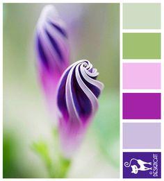Fresh Show Me Purple Colour