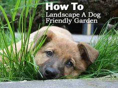 Backyard Ideas To Delight Your Dog Traditional Landscape Dog
