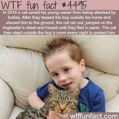 WTF Fun Facts is updated daily with interesting & funny random facts. We post about health, celebs/people, places, animals, history information and much more. New facts all day - every day! I Love Cats, Crazy Cats, Crazy Cat Lady, Cute Funny Animals, Funny Cute, Wtf Fun Facts, Mundo Animal, Faith In Humanity, Animals And Pets