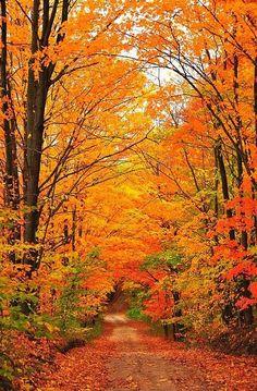 Autumn orange by Quella
