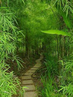 Bamboo trail in Bali, Indonesia | Backyards Click
