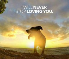 I have safety and security because I know my dog will never stop loving me and that saves my life...