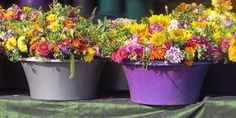 Comment utiliser le sulfate de magnésium pour les plantes en pots ?  1. Dissolvez 1 cuillère à soupe de sulfate de magnésium pour 2 litres d'eau.  2. Utilisez ce mélange pour arroser vos plantes au moins 1 fois par mois. Mais vous pouvez l'utiliser aussi souvent que vous voulez —sans danger pour vos plantes.   Découvrez l'astuce ici : http://www.comment-economiser.fr/astuce-beau-jardin-sulfate-magnesium.html