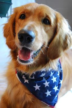 Happy 4th of July!!!! Ahhhh....I needed these bandanas for Sunny and Stella!