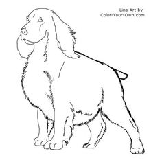 Springer Spaniel Coloring Page- Going to copy Maddie's markings on here.