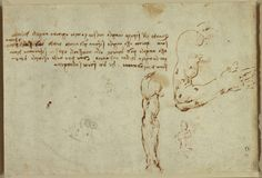 Leonardo da Vinci Anatomy References - Daily Art