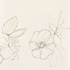@momentalmama's Pansies.  #illustration #sketch #artist #flowers #pansies #onebooktwobooks  #artchangeslives