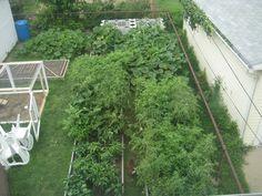 Backyard garden with chickens ... Cleveland.