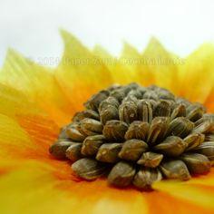 Paper Zen: How to make a Paper Sunflower