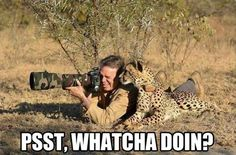 Psst!  Whatcha doin'?
