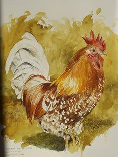 artenatura: gallos