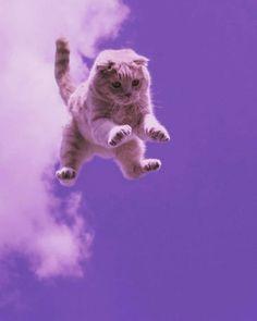 Cute Baby Cats, Cute Little Animals, Cute Funny Animals, Kittens Cutest, Iphone Wallpaper Cat, Cute Cat Wallpaper, Animal Wallpaper, Baby Animals Pictures, Cute Animal Photos