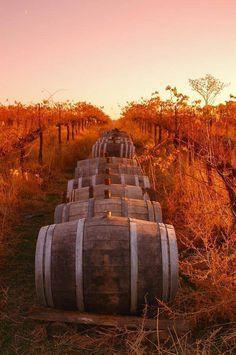Tuscany vineyard in autumn