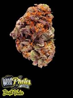 "Darth Vader Marijuana Strain: one of the more menacing named strains in all the universe ""Darth Vader.""  With unknown phenotypes, this killer strain's genetics remain a mystery. Though some say Darth Vader is the offspring of an Afghani father and a purple Kush mother. Ominously cloaked in purple the flower is armed with transient layers of THC potent trichomes, providing that extra punch to Darth Vader's light saber hit."