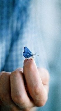""""""" when you see a Butterfly think of me"""".Here is her favorite color again Blue.She had a blue car and left us in a blue dress.I miss her with all my heart Butterfly Kisses, Butterfly Flowers, Blue Butterfly, Beautiful Butterflies, Love Blue, Aqua Blue, Something Blue, My Favorite Color, Shades Of Blue"""