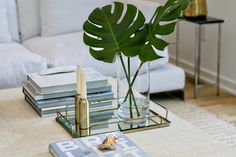 Sorry Pothos (and Rubber Tree), but I Think the Monstera Plant is Actually the New Fiddle Fig