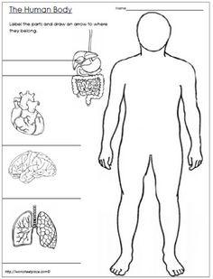 sistemas del cuerpo humano educacion pinterest sistemas del cuerpo humano el cuerpo. Black Bedroom Furniture Sets. Home Design Ideas